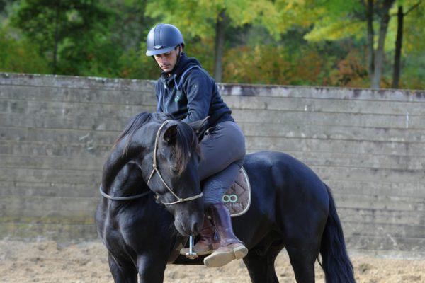 confiez votre cheval