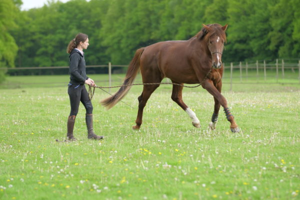 La locomotion du cheval