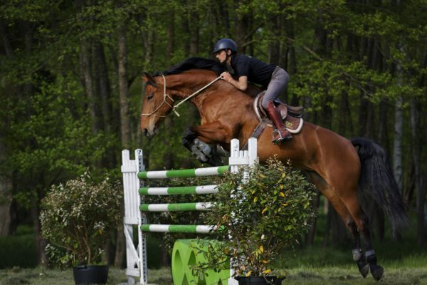 Stage Cavalier Homme de cheval